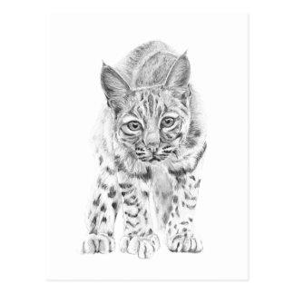 På kringstrykandet en ung Bobcat Vykort