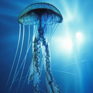 Konst under vatten