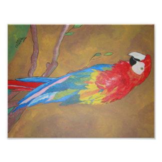 Paco fågel av färg fototryck