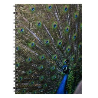 påfågel anteckningsbok