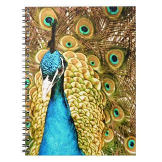 Påfågel Anteckningsbok Med Spiral