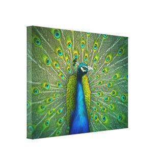 Påfågel - djurlivkonstkanfas 18x24 sträckta kanvas tryck