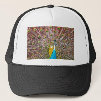 Påfågel Keps