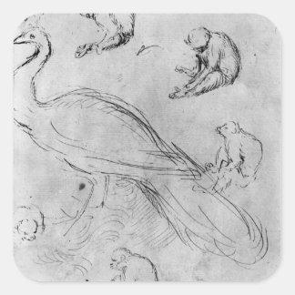 Påfågel och sex apor fyrkantigt klistermärke