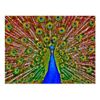 Påfågel Vykort