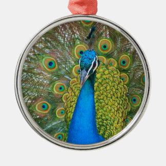 Påfågelblåtthuvud med och färgrika svanfjädrar julgransprydnad metall