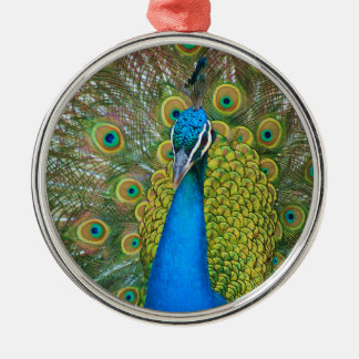 Påfågelblåtthuvud med och färgrika svanfjädrar rund silverfärgad julgransprydnad