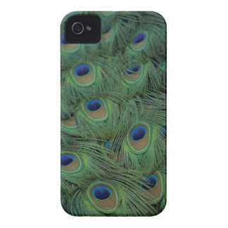 Påfågelfjädrar iPhone 4 Fodral