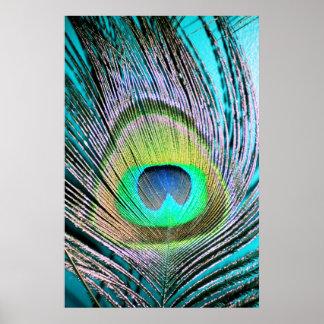Påfågelfjädrar på turkos poster