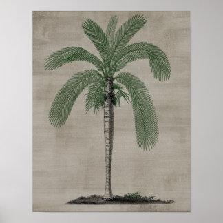 Palmträd Poster