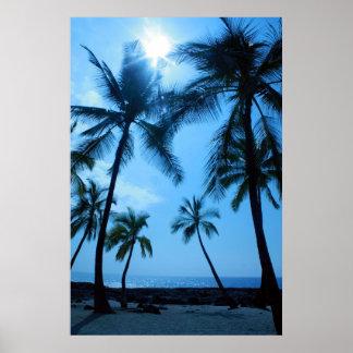 Palmträd och blå himmelaffisch posters