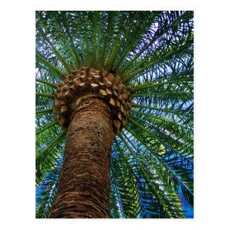 Palmträd- och strandbröllopinbjudan vykort