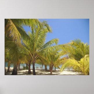 Palmträd på en strand för Honduras vitSand Poster