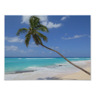 Palmträdstrand karibiska Barbados Poster