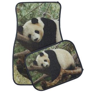 Pandabjörn Bilmatta