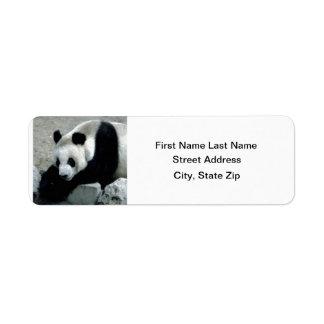 Pandabjörn på stenar returadress etikett