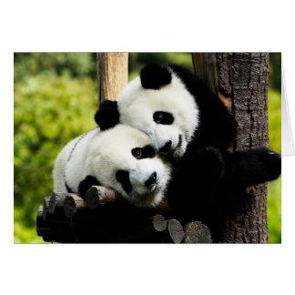 Pandabjörnar Hälsningskort