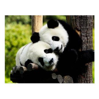 Pandabjörnar Vykort