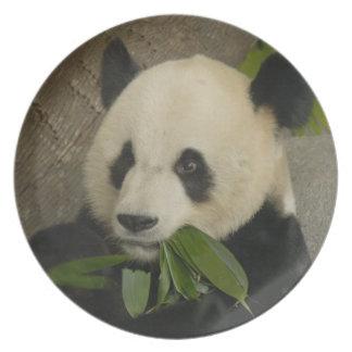 PandaM014 Tallrikar