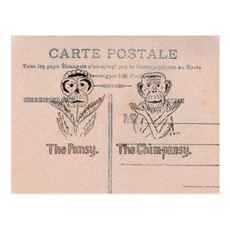 Pansy- och schimpanshumor vykort