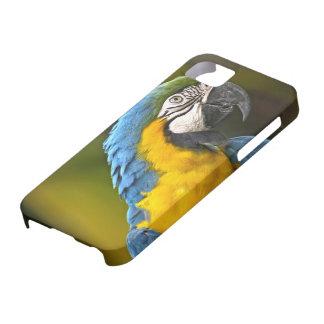 Papegoja iPhone 5 Hud