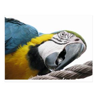 Papegoja på rep vykort