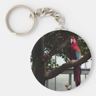 Papegoja Rund Nyckelring