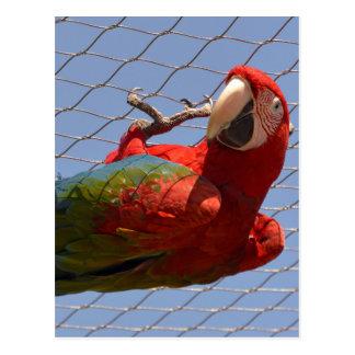 Papegoja som hänger från ett staket vykort