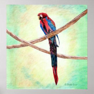 Papegojaaffisch Poster
