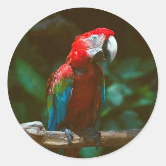 Papegojafågel Runt Klistermärke