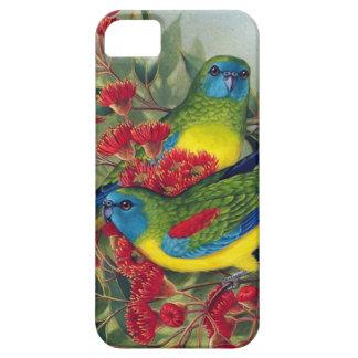 Papegojor iPhone 5 Skydd
