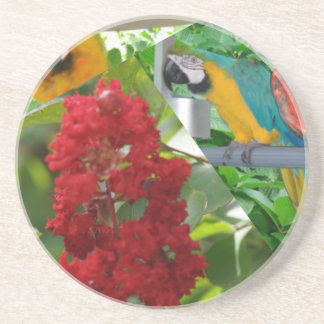 papegojor underlägg