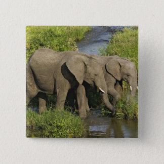 Para av afrikanska elefanter som matar, Masai Mara Standard Kanpp Fyrkantig 5.1 Cm