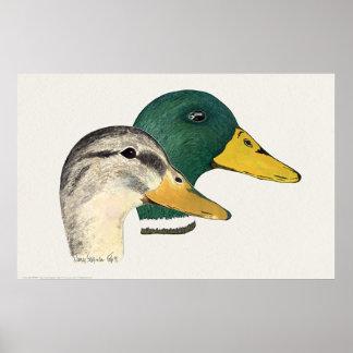 Para av gräsand duckar (draken och hönan) poster