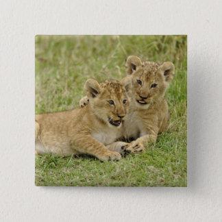 Para av lejona ungar som leker, den MasaiMara leke Standard Kanpp Fyrkantig 5.1 Cm