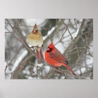 Para av nordliga kardinaler poster