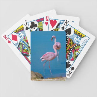 Para av rosa Flamingos som leker kort Spelkort