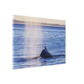 Paradis för surfarear för puckelryggvalsolnedgång canvastryck