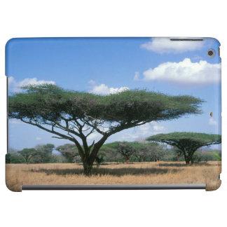 ParaplytaggAcacia (Acaciatortilis), Mkuze
