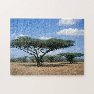 ParaplytaggAcacia (Acaciatortilis), Mkuze Pussel