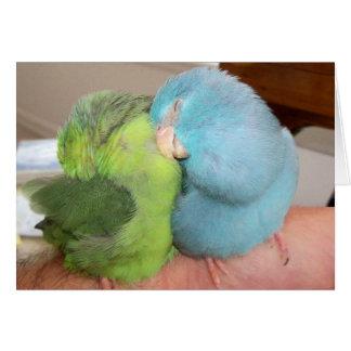 Parrotlet love birds som är säker i dina ärmar hälsningskort