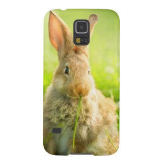 Påskkaniner Galaxy S5 Fodral