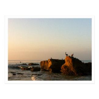 Pelikan på stenvykort vykort