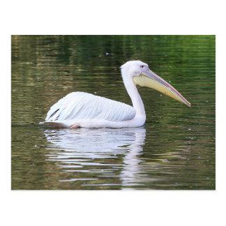 Pelikan Vykort