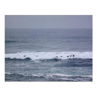 Pelikanflyg över vinkar vykort för Stilla hav