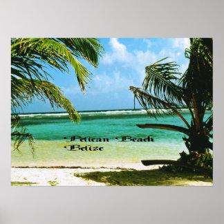 Pelikanstrand Belize Poster
