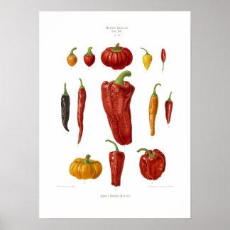 Peppar Poster