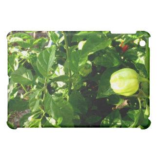 pepparväxt med en paprika iPad mini skal