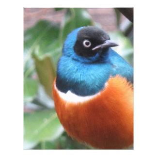 Perched härlig exotisk fågel reklamblad