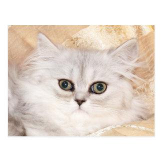 Persiskt kattungeansikte vykort